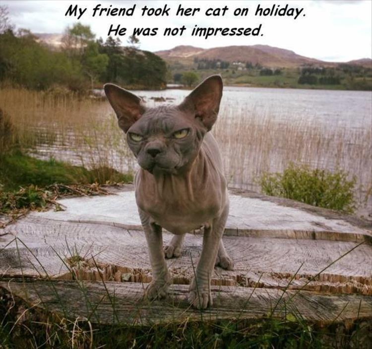 cats hate vacations