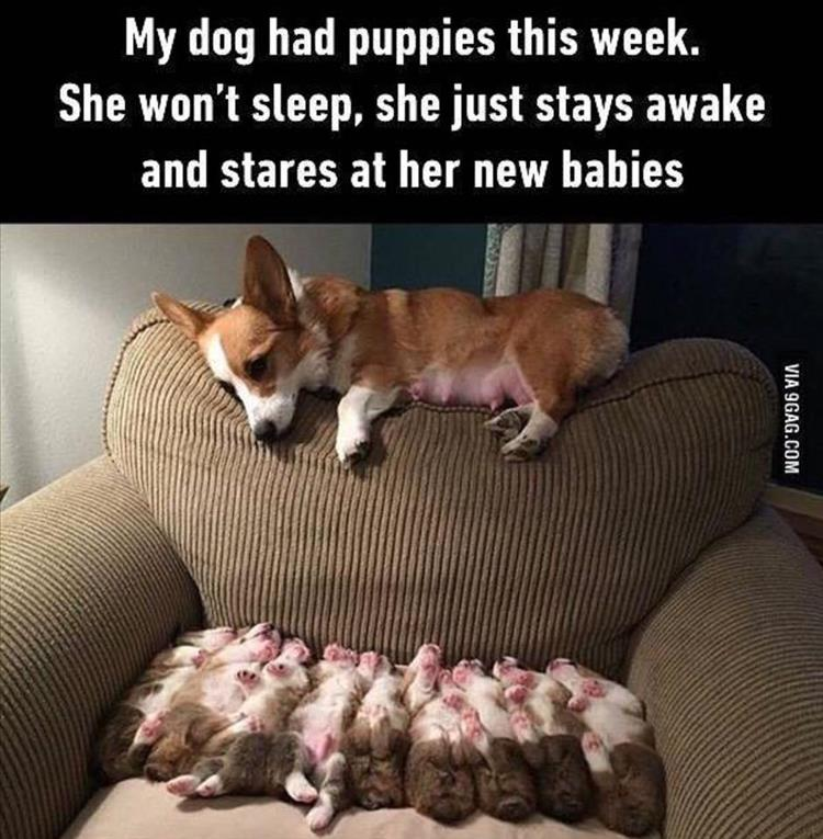 cutest puppies ever