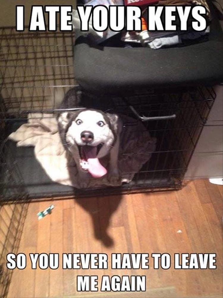 dog thinks he's funny