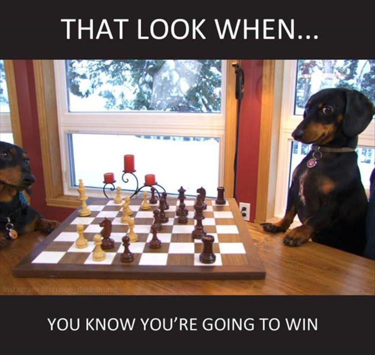 dog winning funny animals