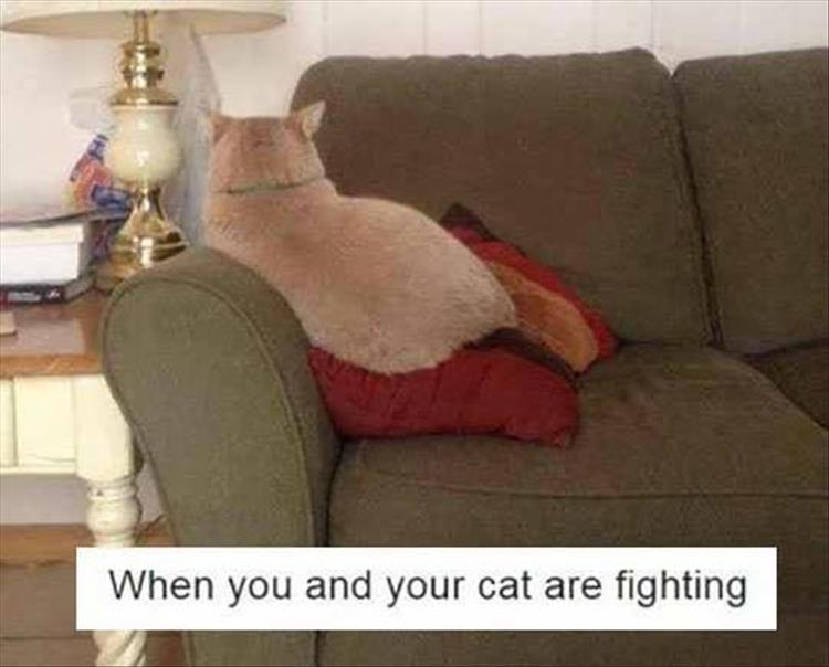 fighting with your cat