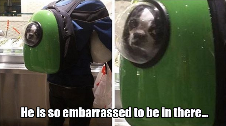 funny backpack for dogs