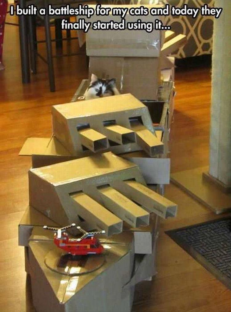 funny battle ship for cat