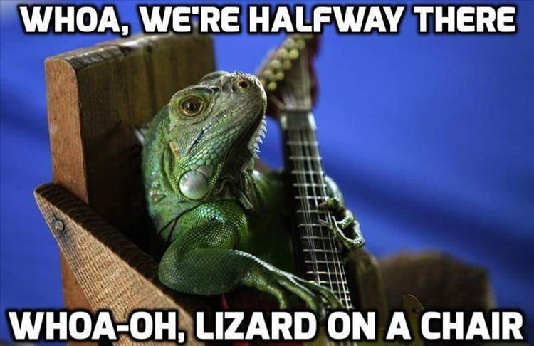 Funny Meme Bon Jovi : Funny pictures of the day pics