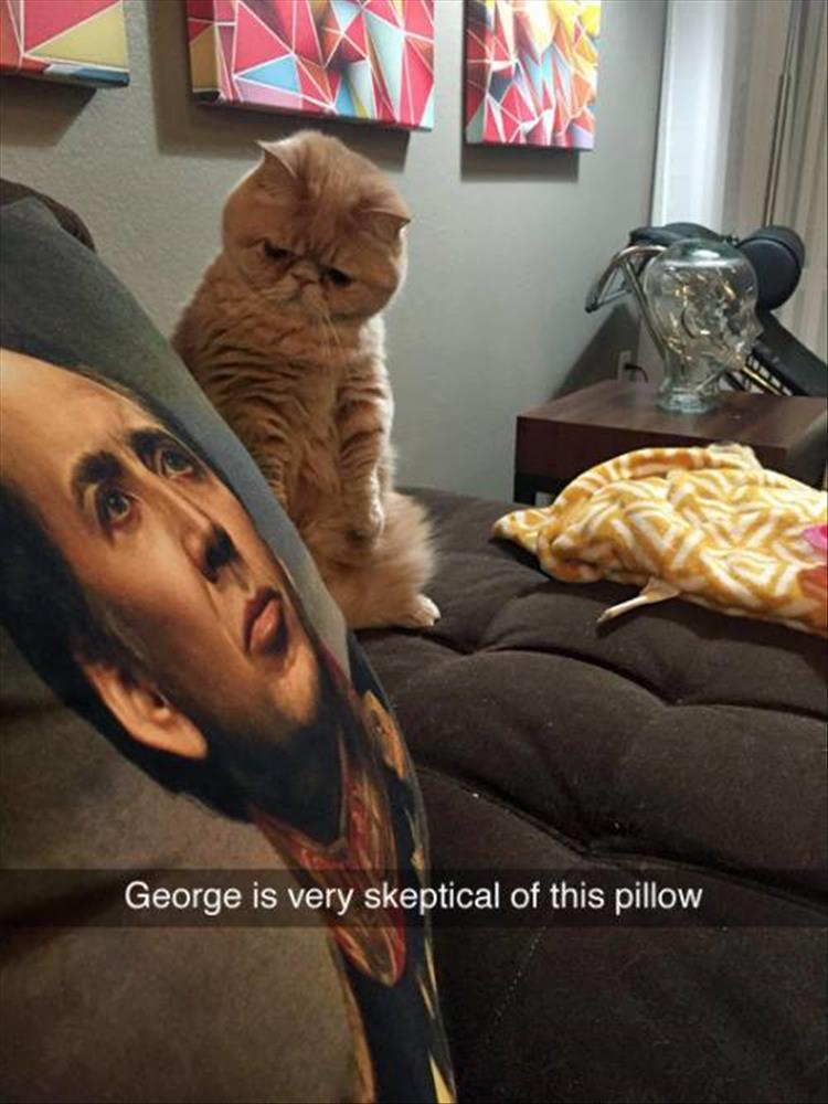 funny cat pillows