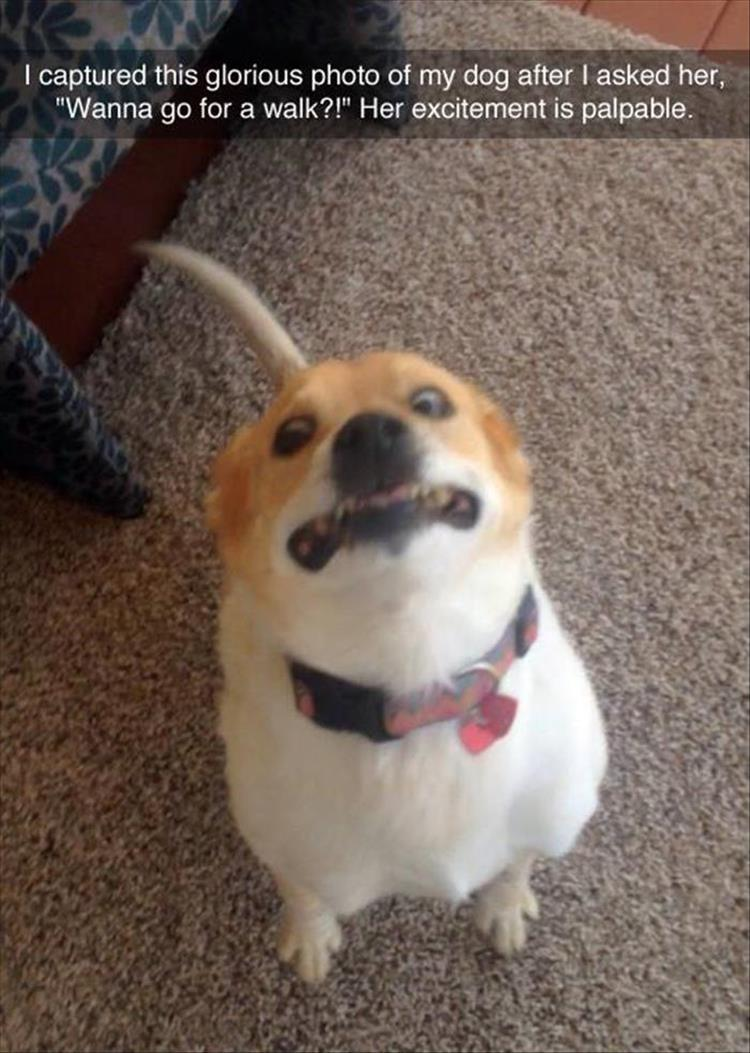 Funny dog face meme - photo#37