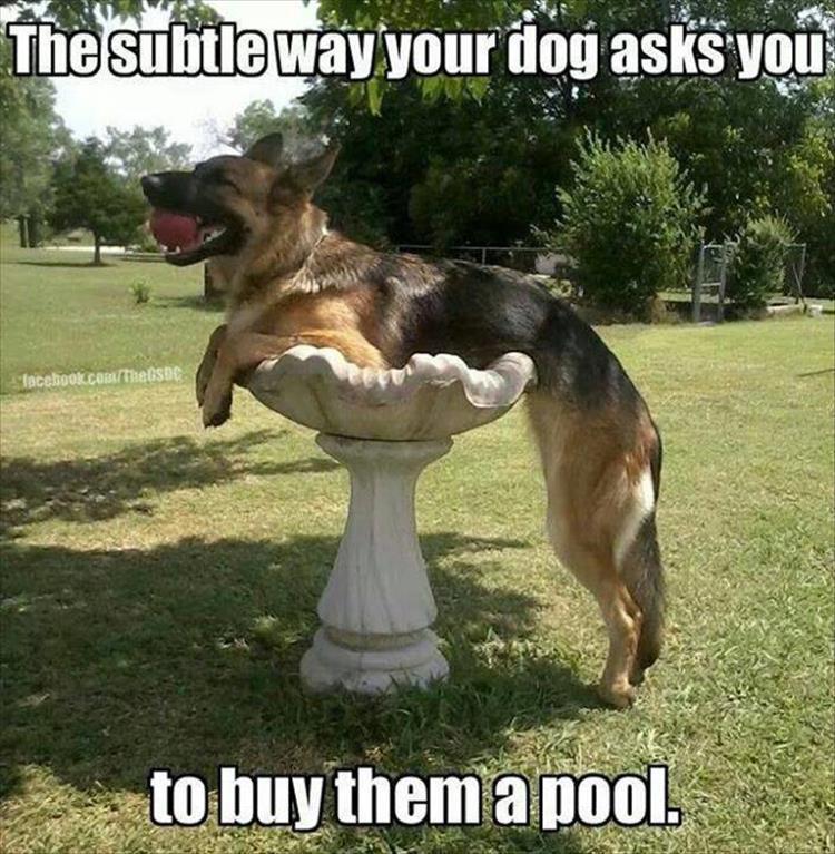 funny dog in a pool