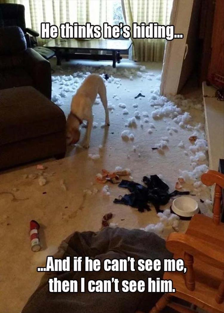 funny dog is hiding