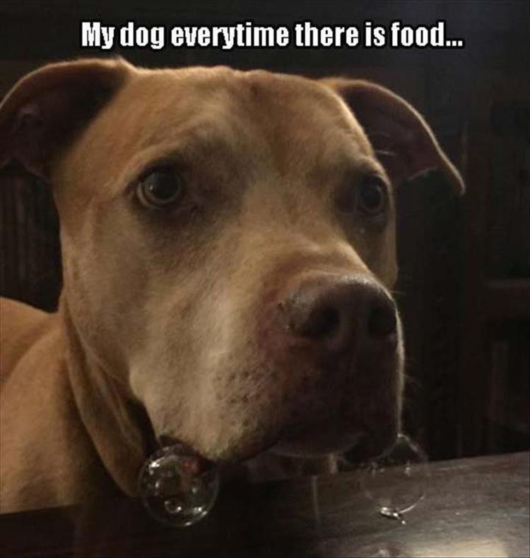 funny dog loves food