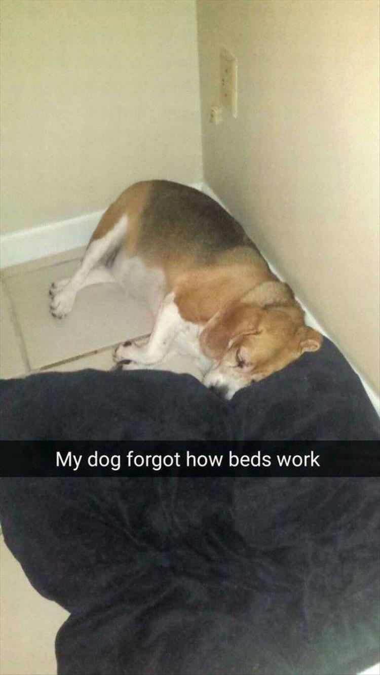 funny doggy bed