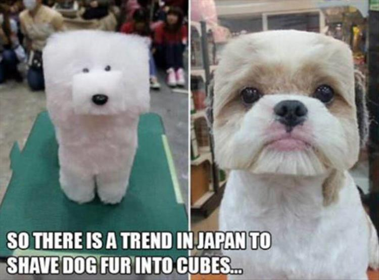 funny hair trends
