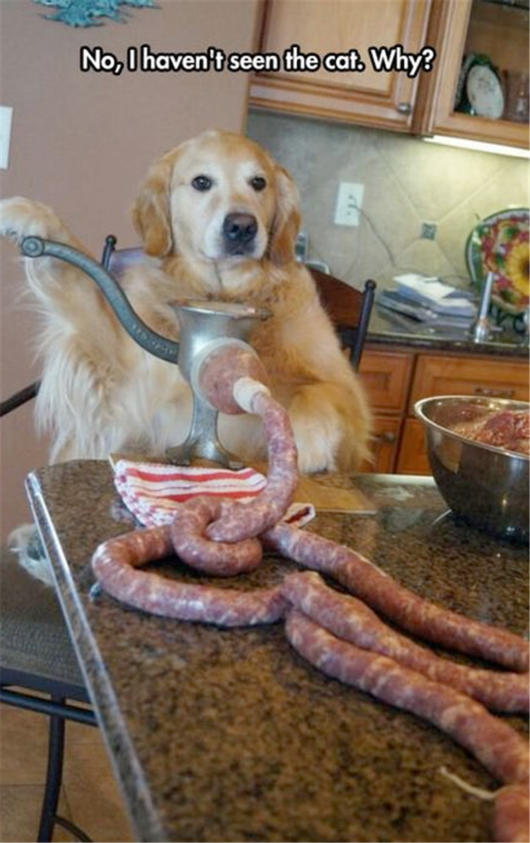 funny meat for dog