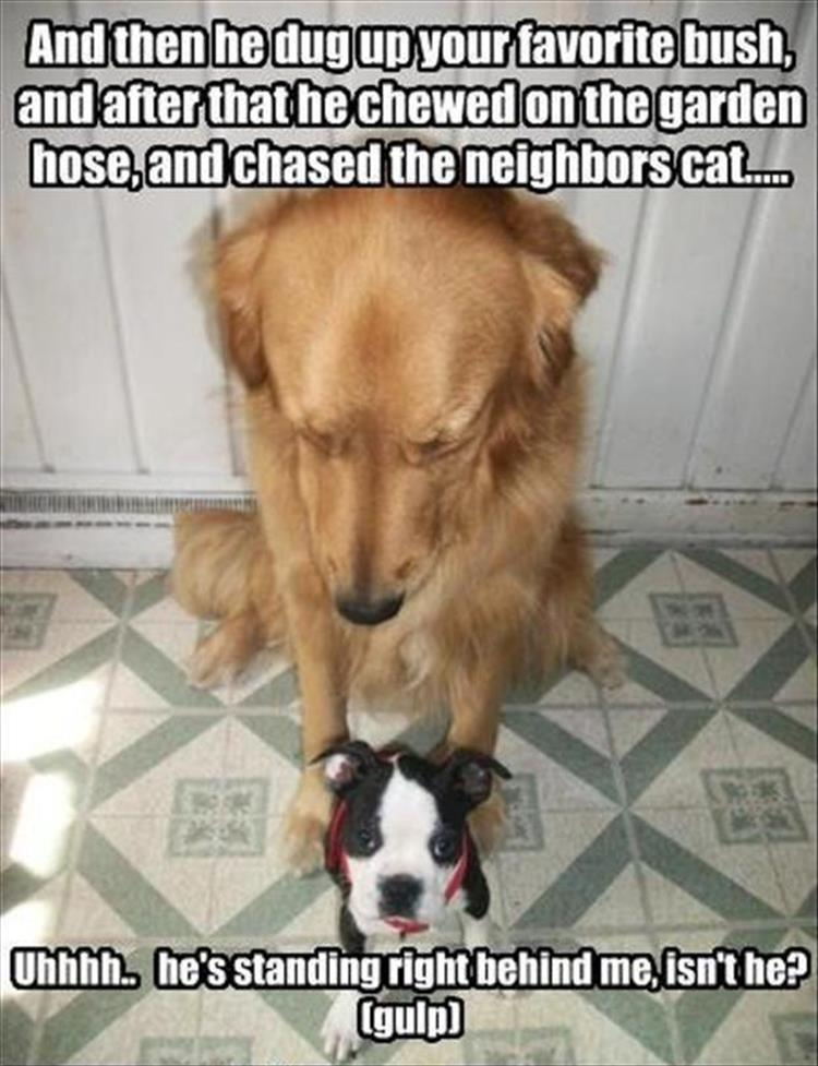 Dogs Make The Day Funny Captions