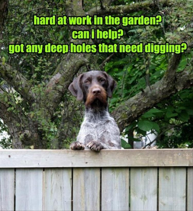 holes need digging