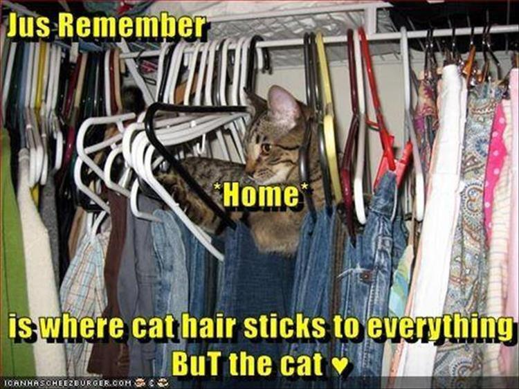 home is where the cat hair sticks to everything