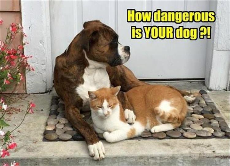 how dangerous is your dog