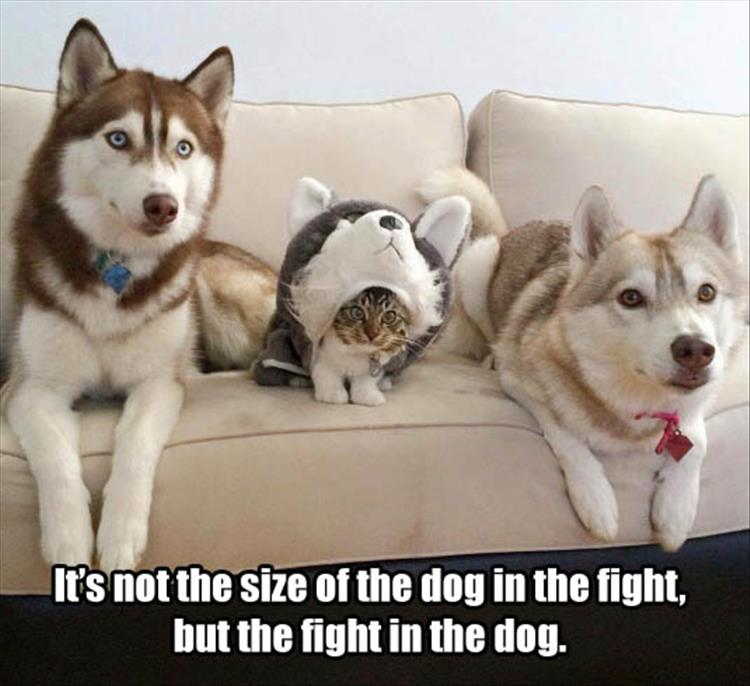 it's not the size of the dog in the fight, but the fight in the dog