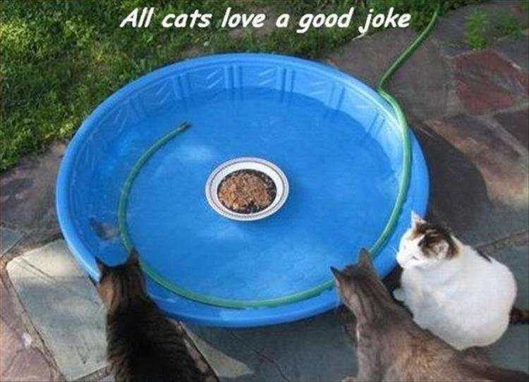 joke on the cat