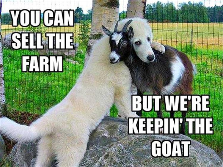 keep the goat