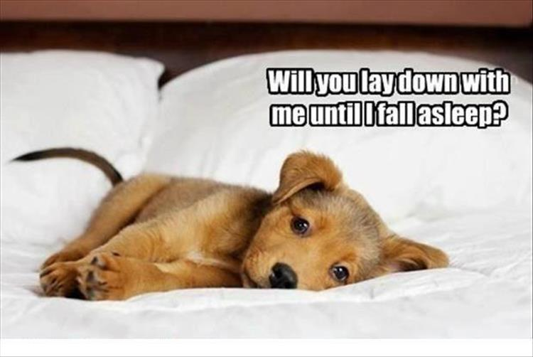 lay down with the dog