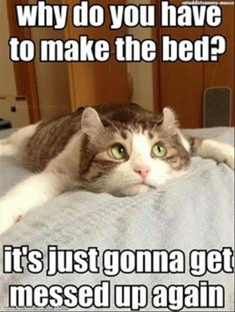 make the bed for the cat