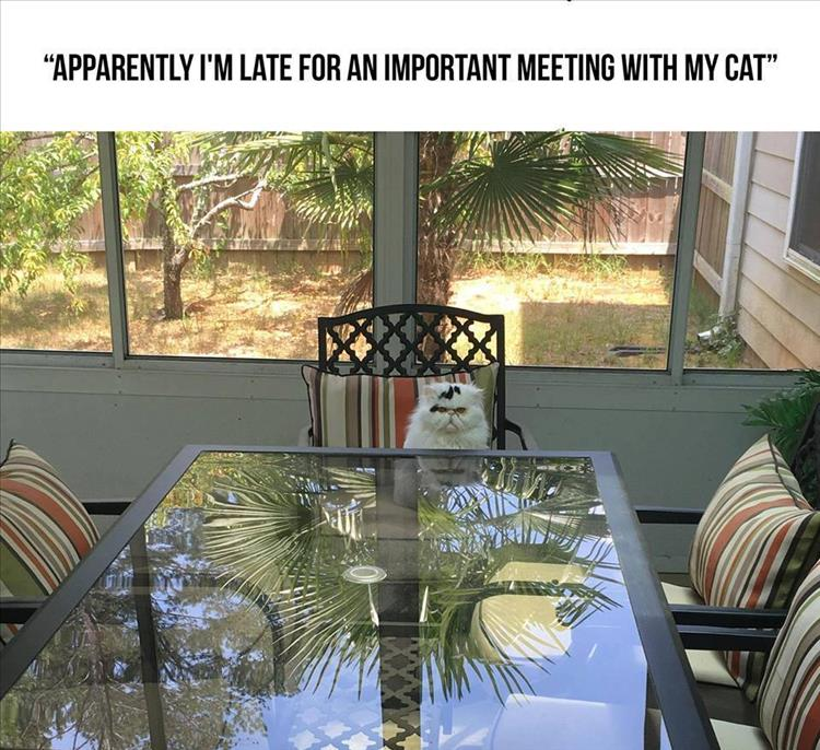 meeting with the cat