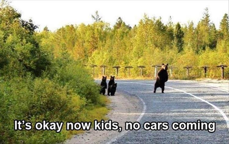 no cars are coming