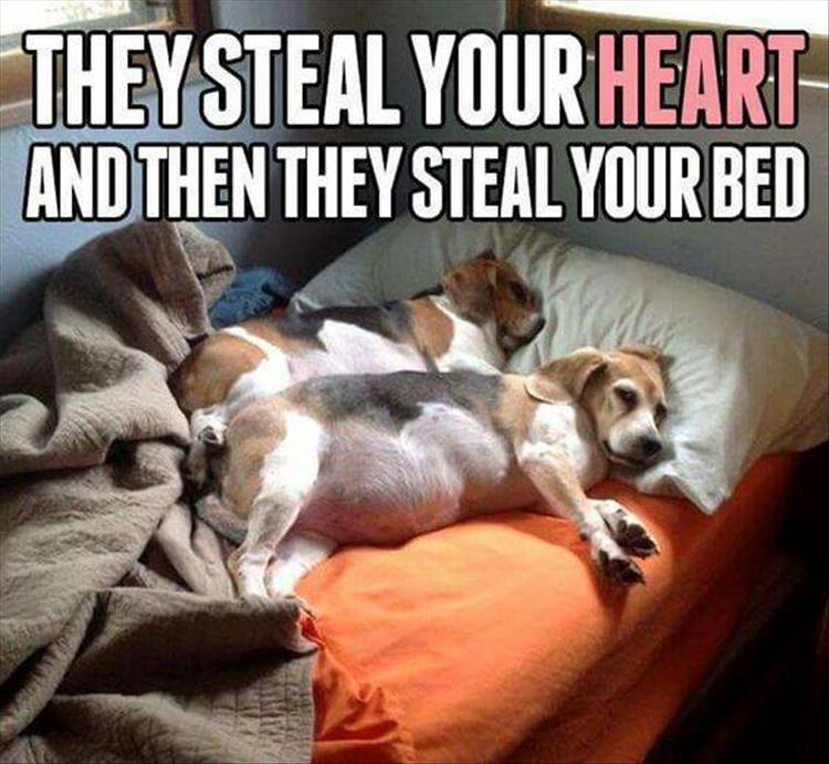 pets steal your bed