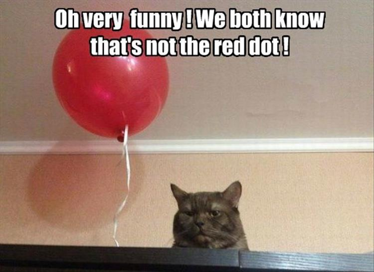 red dot for cats