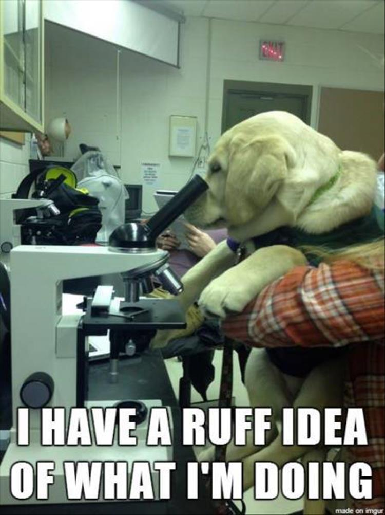 science dog