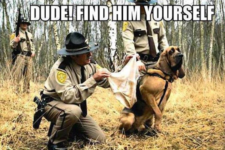 search-dogs.jpg