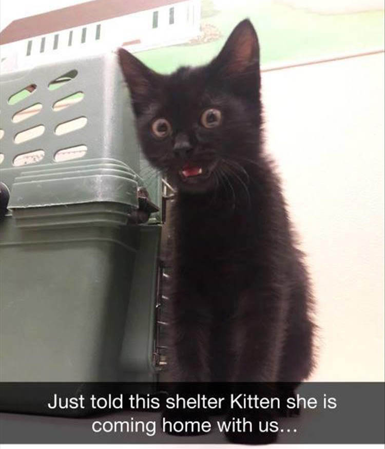 shelter kitty