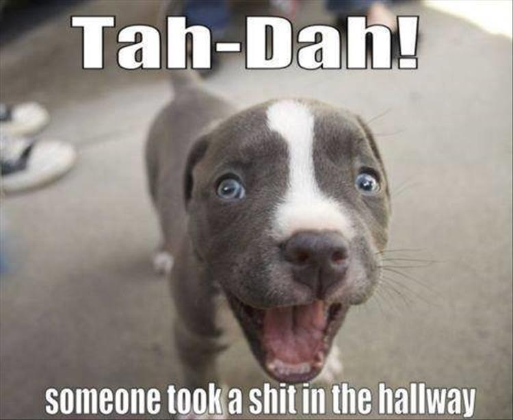 someone shit in the hallway funny dog