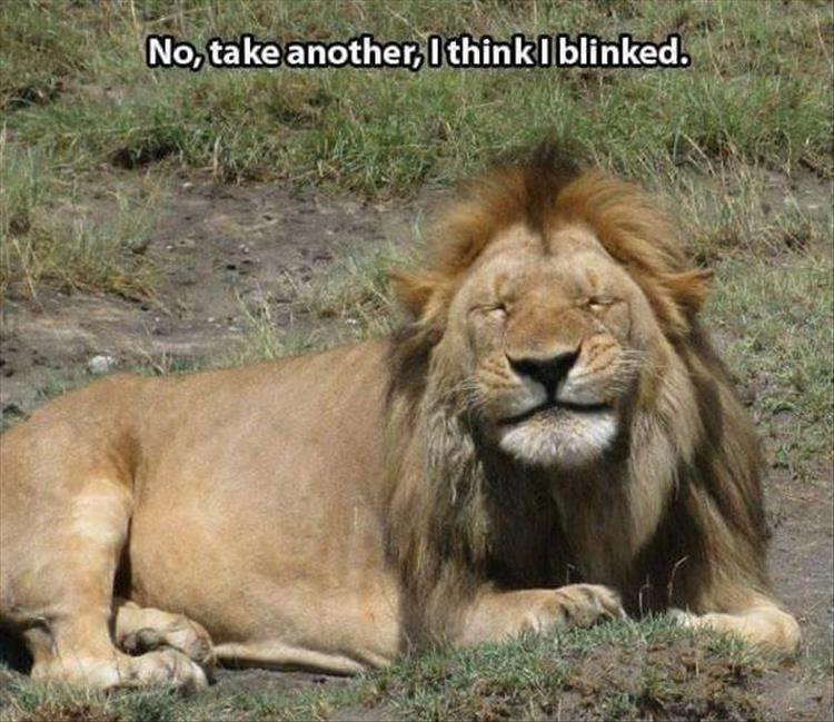 take a picture of the lion