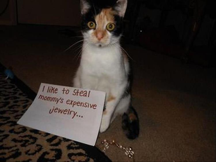 the best cat shaming