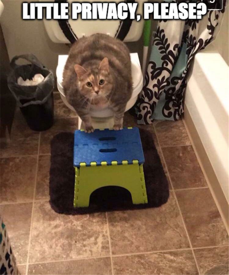the cat going to the bathroom