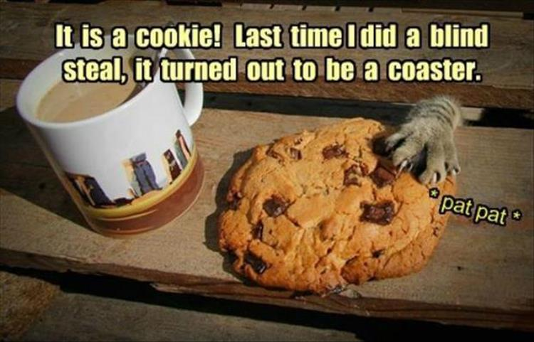 the cat loves cookies