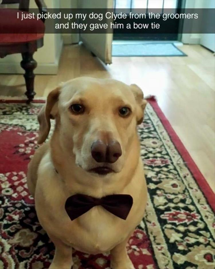the dog has a bow tie