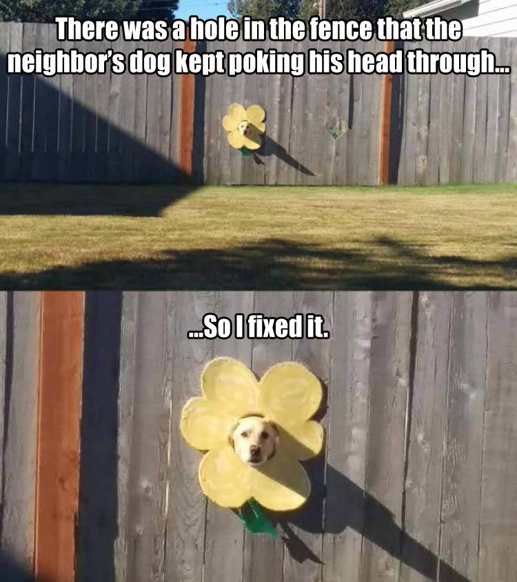 the dog in the fence