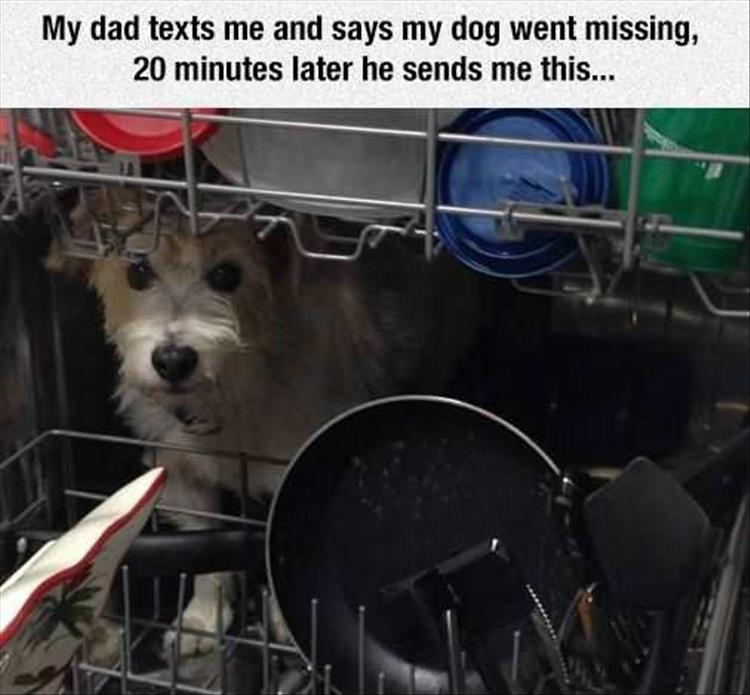 the dog is missing