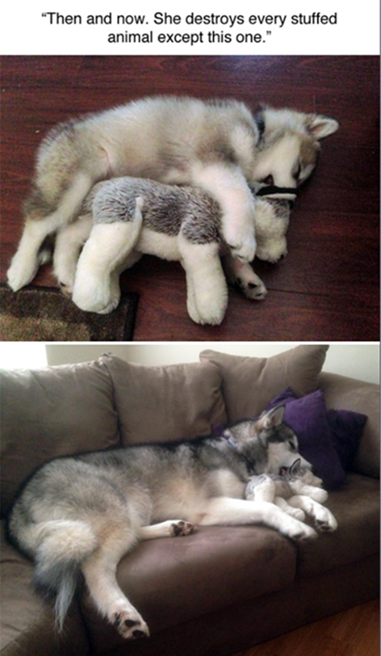 the dog loves his stuffed animal