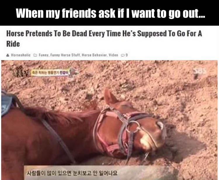 the horse pretends to be dead when he's supposed to go out for a ride