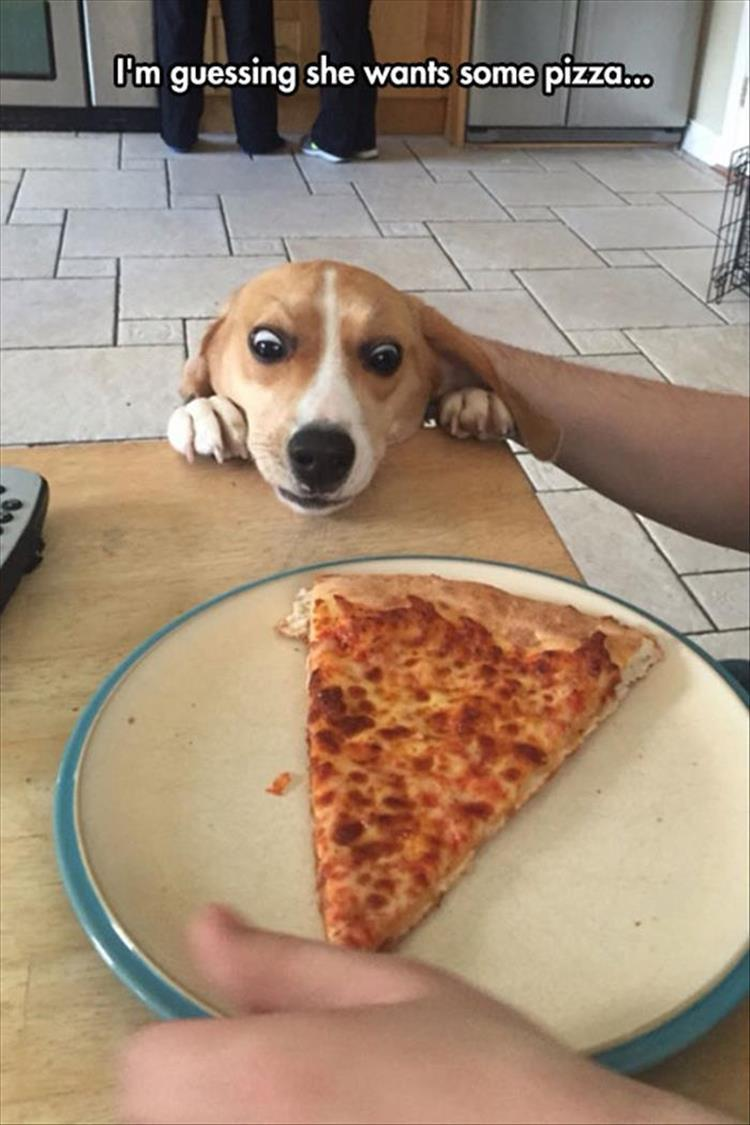 wants some pizza