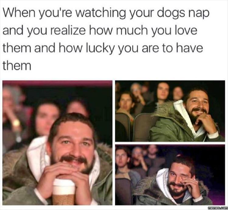 watching your dog nap