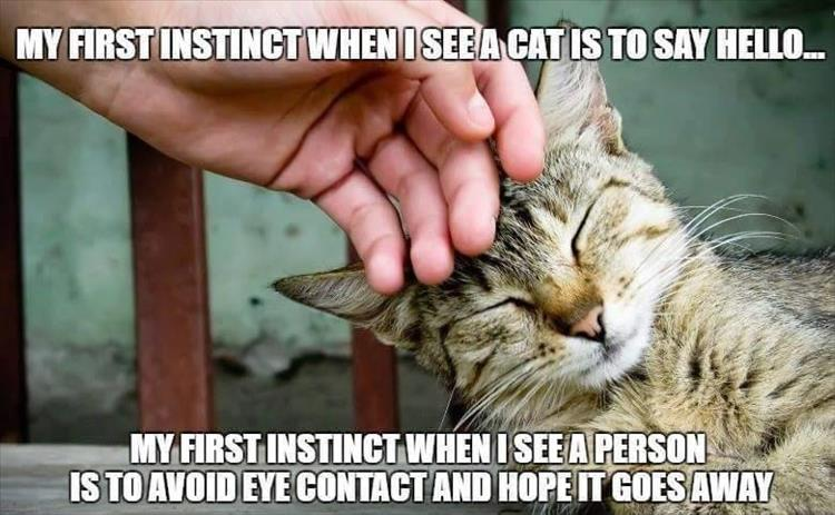 when I see a cat