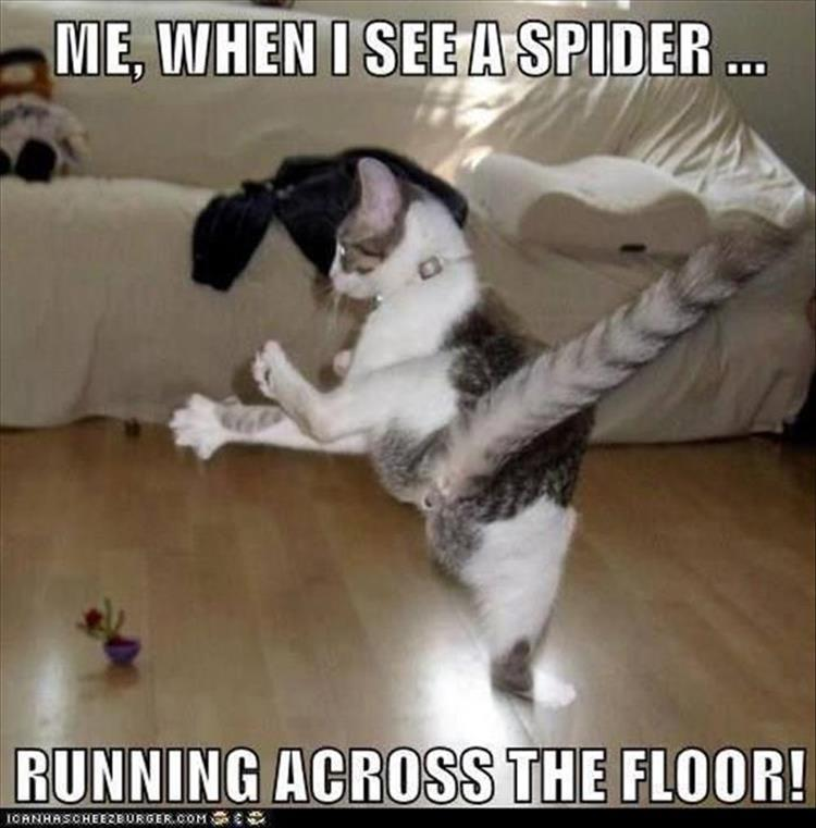 when I see a spider