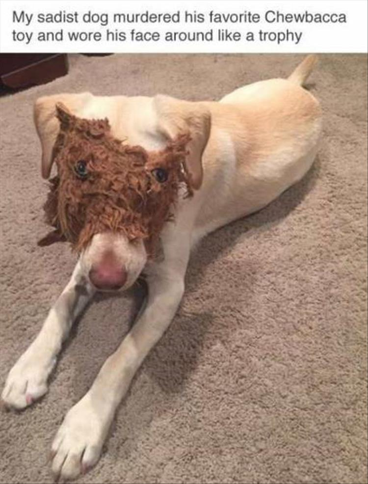 when the dog chews his toys