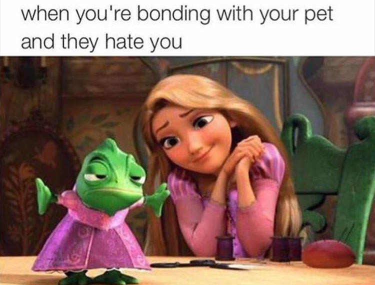 when you bond with your pet