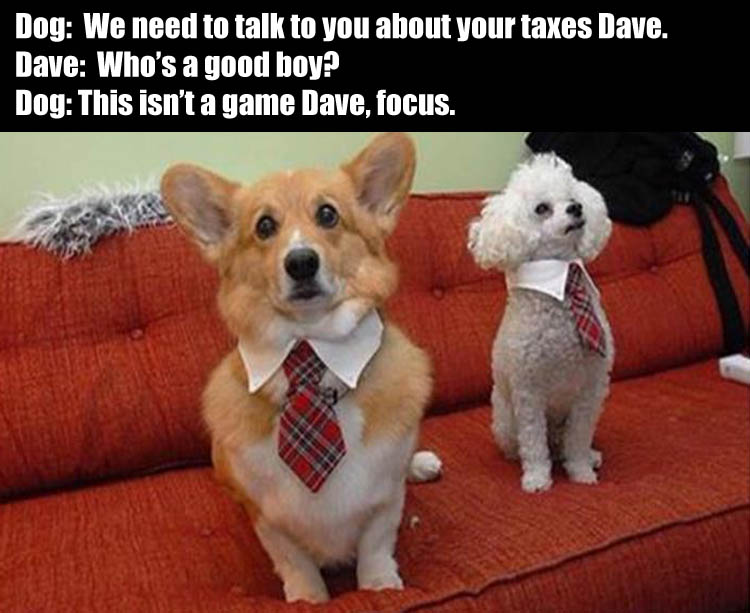 who's a good boy we need to talk about your recent tax report