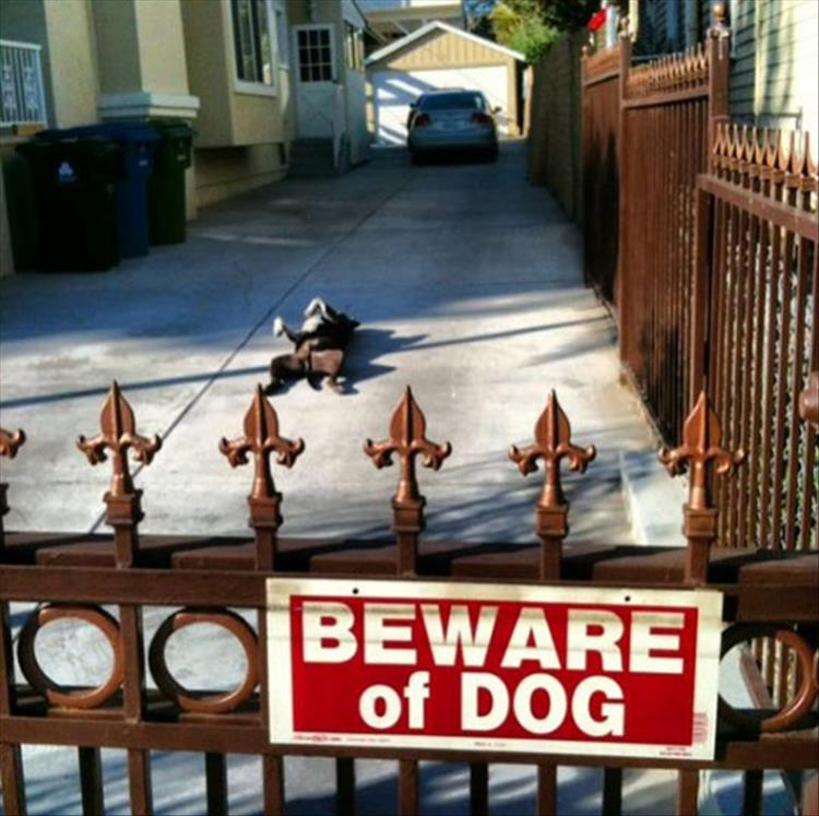 Beware Of Dog Signs You Can Probably Just Ignore 15 Pics